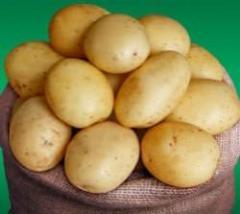 Картофель Ривьера , Морковь Бангор и Нейрах