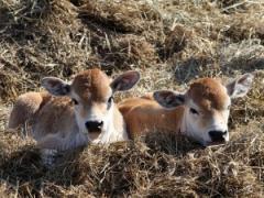Комбикорм предстартер для телят 0-2 мес (СП...