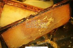 Мёд из лекарственных трав
