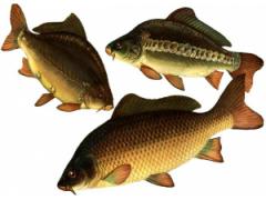 Кормові добавки для риб