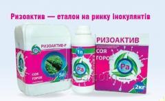 Інокулянт Ризоактив – високоефективний інокулянт