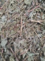 Repyashok grass (Agrimonia eupatoria L.) Family