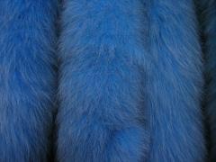 Опушка голубая,  енот