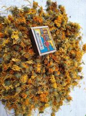 Calendula color (Calendula officinalis L.) Family