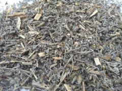 Pauline grass (Artemisia absinthium L.) Family