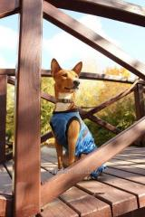 Puppies of a basenji of different colors. Knitting