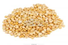 Peas extruded for the production of animal feed,