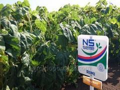 Семена подсолнечника Рими 2 (под Евролайтинг)