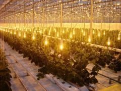 Осветительные  системы для растений