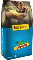 Семена Рапс озимый Эксагон, среднепоздний Монсанто/насіння Ріпака Ексагон, 1,5 млн. шт.