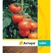 Інсектицид Актара  25  WG, в. г. (0,04 кг) (замовляти від 5 кг)