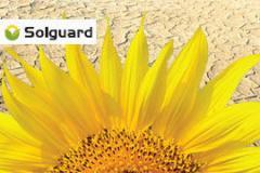 Гібрид насіння соняшнику  Босфора Круізер