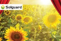 Гібрид насіння соняшнику  НК Ададжіо Круізер