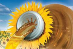 Гібрид насіння соняшнику  НК Брио (Текни)