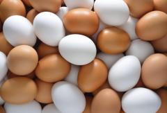 Яйцо куриное пищевое (столовое)