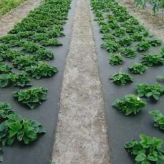 Агроволокно черное 50 гр/м²