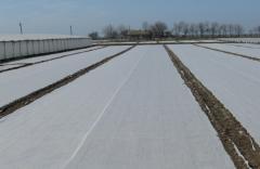 Агроволокно белое 50 гр/м²
