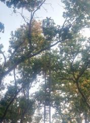 Профессиональная обрезка деревьев, в том числе в
