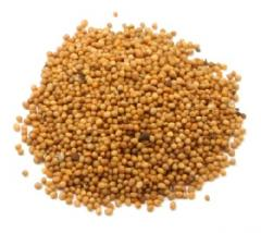 Mustard grains, mustard, bean and krupyany