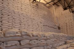 Beet sugar for export
