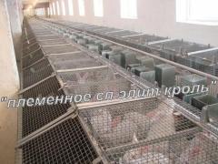 Клетки маточные кролей,  оборудование для...