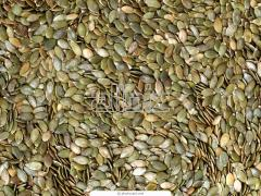 Kernel pumpkin sunflower seeds