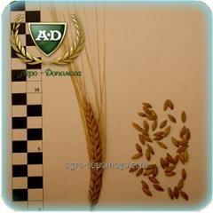 Семена ярового ячменя Взирець