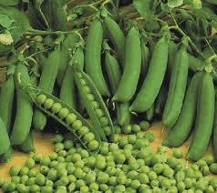 Seeds of peas vegetable, Semyon of peas Primary