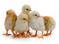 Комбикорм старт молодняк яичных кур 0-8 недель СП