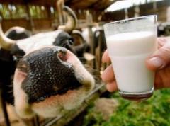 Whole milk substitute Telyatko Junior + (25-30