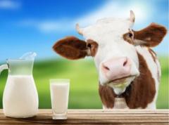 Milk substitutes