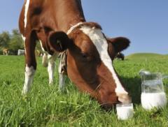 Заменитель обезжиренного молока Супермилк (для
