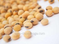 Семена сои Султана