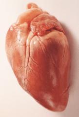 Сердце свиное (арт. 442), зам