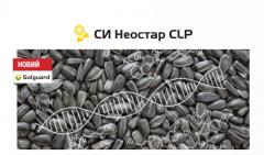 Семена подсолнечника  Неостар CLP