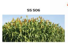 Семена сарго SS 506