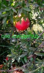 Pomegranate (гранат свежий)