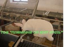 Клетки откорма двухэтажная КО-2 для кролей