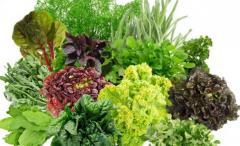 Разная зелень different greens