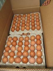 Яйца куриные. Категория С1 экспорт