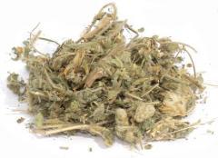 Астрагал шестистоцветковый трава