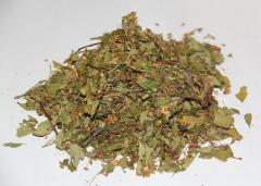 Θεραπευτικά βότανα
