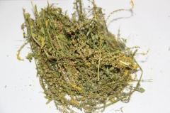 Доник желтый трава