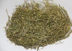 Пастушья сумка трава