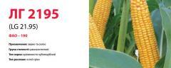Семена кукурузы ЛГ 2195 (LG 21.95)