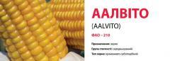 Семена кукурузы ААЛВІТО (AALVITO)