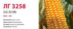 Семена кукурузы ЛГ 3258 (LG 32.58)