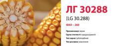 Семена кукурузы ЛГ 30288 (LG 30.288)