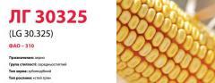 Семена кукурузы ЛГ 30325 (LG 30.325)