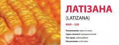Семена кукурузы ЛАТІЗАНА (LATIZANA)